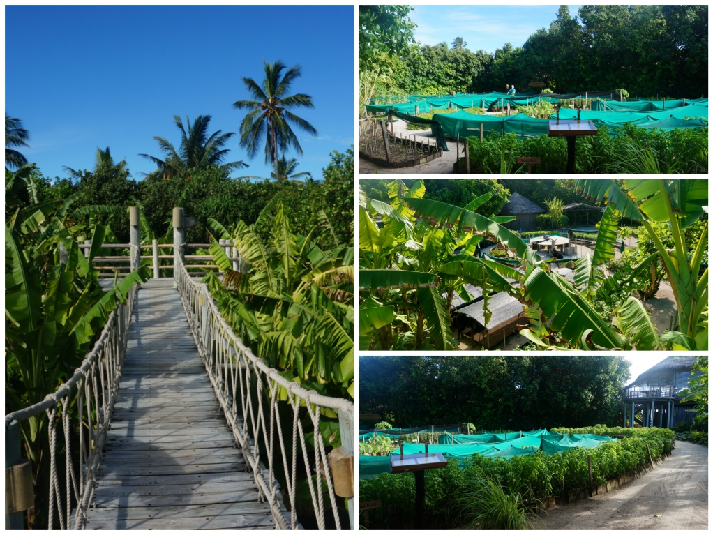 organic garden six senses laamu 11_Fotor_Collage