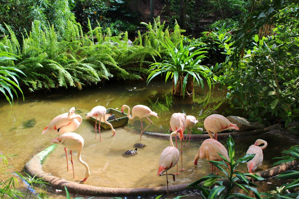 tierwelt tropical islands.7