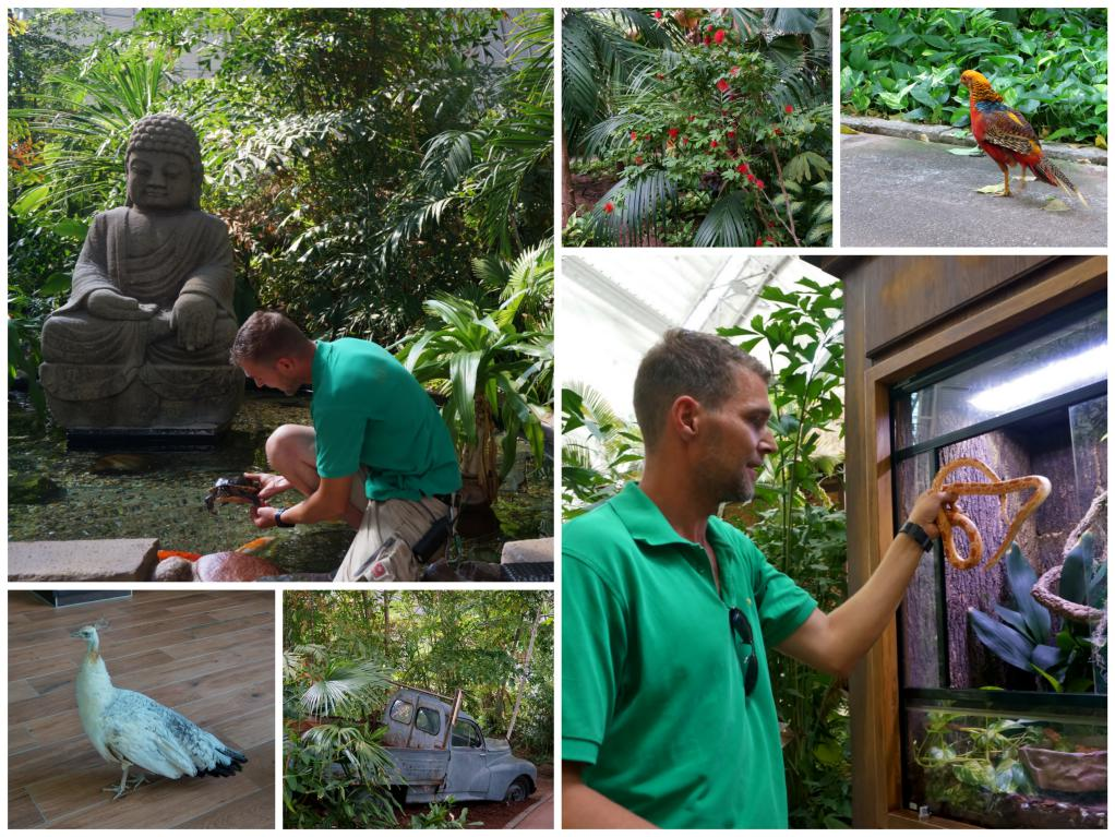 tierwelt tropical islands_Fotor_Collage